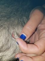 Ceniza, mi mascota desconocida hembra, tiene pérdida de piel