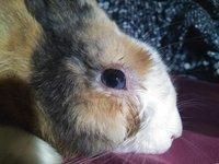 Secreción ocular en roedores, Desconocida