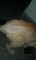 Pérdida de piel en gatos, Desconocida