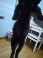 Dificultad para defecar en gatos, Desconocida