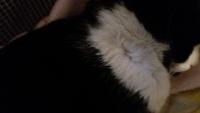 Maxi, mi gato común europeo macho, tiene mordeduras