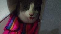 Arcadas en gatos, Desconocida