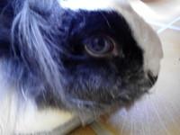 Gorda, mi mascota desconocida hembra, tiene un problema de salud