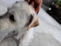 Agresiones en perros, Desconocida