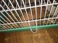 Rayy, mi roedor cobaya macho, tiene picor y rascarse, pérdida de piel y heridas