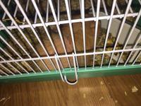 Pérdida de pelo en roedores, Cobaya
