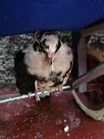 Agresiones en aves, Desconocida