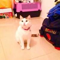 Fifi, mi gato desconocida hembra, tiene sangre en orina