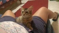 Cojera en gatos, Desconocida
