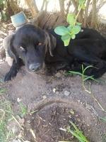 Dificultad al tragar en perros, Desconocida