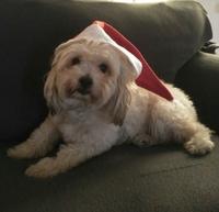 Quesillo, mi perro cruce macho, tiene un problema de salud