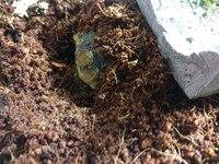 Tengo una duda sobre Hera, mi reptil tortuga mediterránea hembra