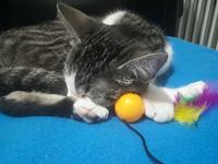 Nora, mi gato desconocida hembra, tiene dolor al contacto y heridas