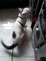 Sangre en las heces en gatos, Desconocida