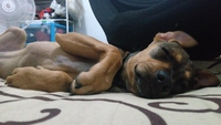 Flatulencia en perros, Desconocida