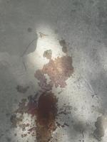 Meca, mi perro desconocida hembra, tiene sangrado anal, sangre en las heces y dificultad para defecar