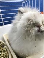 Snowy, mi mascota cruce macho, tiene estornudos y tos