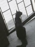 Rigoberto, mi gato desconocida macho, tiene dolor al contacto, mordeduras y agresiones