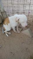 Dificultad para defecar en perros, Desconocida