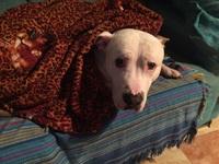 Estreñimiento en perros, Staffordshire Terrier americano