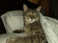 Orina demasiado frecuentemente en gatos, Desconocida