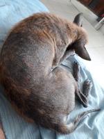 Jpot, mi perro cruce macho, tiene pérdida de piel, pérdida de pelo y picor y rascarse