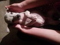 Itachi, mi perro desconocida macho, tiene estreñimiento, dificultad para defecar y gusanos en las heces