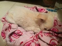 Doki, mi perro cruce macho, tiene diarrea, gusanos en las heces y vómito con sangre