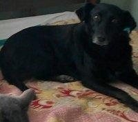Negra, mi perro cruce hembra, tiene tos y arcadas