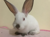 Lola, mi mascota cruce hembra, tiene estornudos