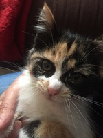 Secreción ocular en gatos, Desconocida