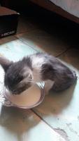 Dificultad para mover las patas traseras en gatos, Desconocida