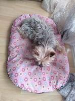 Cheli, mi perro yorkshire terrier hembra, tiene temblores y arrastra las patas