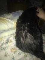 Dolor al contacto en gatos, Desconocida