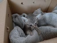 Tom, mi gato desconocida macho, tiene mal apetito, bulto en la piel y desánimo, decaído, triste, depresión