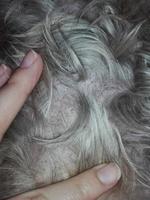 Lola, mi perro yorkshire terrier hembra, tiene picor y rascarse, ansiedad al comer y piel seca