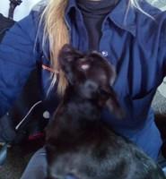 Pupilas dilatadas en perros, Chihuahueño