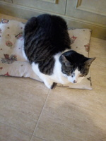 Miercoles, mi gato cruce macho, tiene vómito, cansancio o fatiga y vómito blanco espumoso