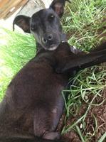 Ponki, mi perro cruce de galgo español macho, tiene vómito y cansancio o fatiga