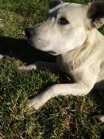 Ares, mi perro cruce macho, tiene inflamación boca