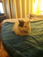 Vómito blanco espumoso en gatos, Desconocida