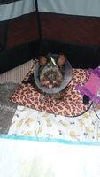 Linda, mi perro yorkshire terrier hembra, tiene desánimo, decaído, triste, depresión y diarrea amarilla