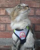 León, mi gato desconocida macho, tiene pérdida de pelo