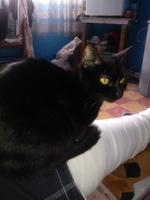 Dolor abdominal o de estómago en gatos, Desconocida