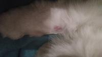 Bulto en la piel en gatos, Desconocida