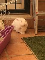 Mal apetito en roedores, Desconocida