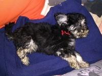 Bola, mi perro cruce hembra, tiene mal apetito, pérdida de visión y parálisis