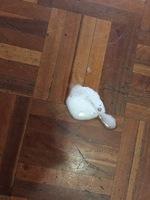 Rocky, mi perro bóxer macho, tiene vómito, babeo excesivo o espuma blanca por la boca y vómito blanco espumoso