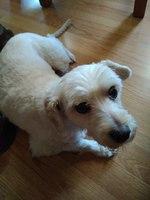 Diarrea amarilla en perros, Desconocida