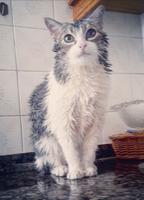 Caspa en gatos, Desconocida